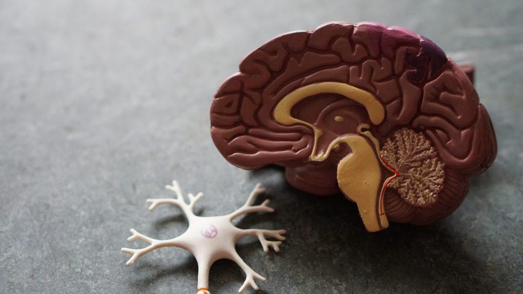 beyin-sagliginiz-icin-hangi-besinler-onemli